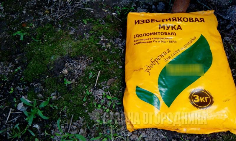 Зеленая почва и Мох на грядках – не приговор! Расскажу 5 способов избавиться от мха на участке надолго и наверняка