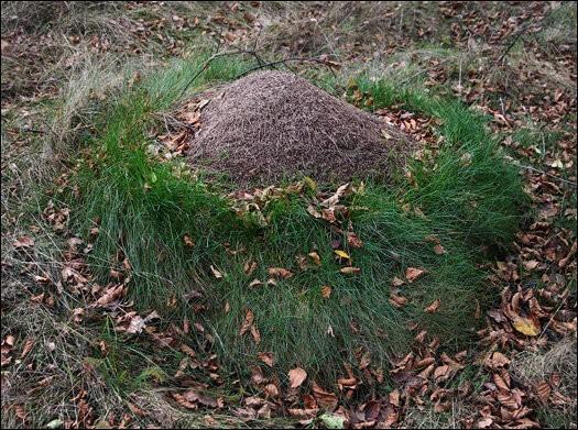 Знакомый агроном поделился хитростью, как навсегда избавиться от муравьев на участке, буквально за 2 дня.