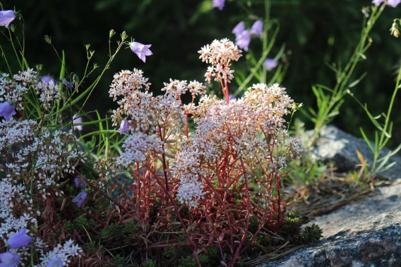 Что красивого в моем саду 13 июля