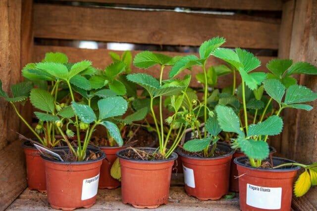 Хозяйственное мыло – экологический чистый способ борьбы с вредителями и болезнями растений