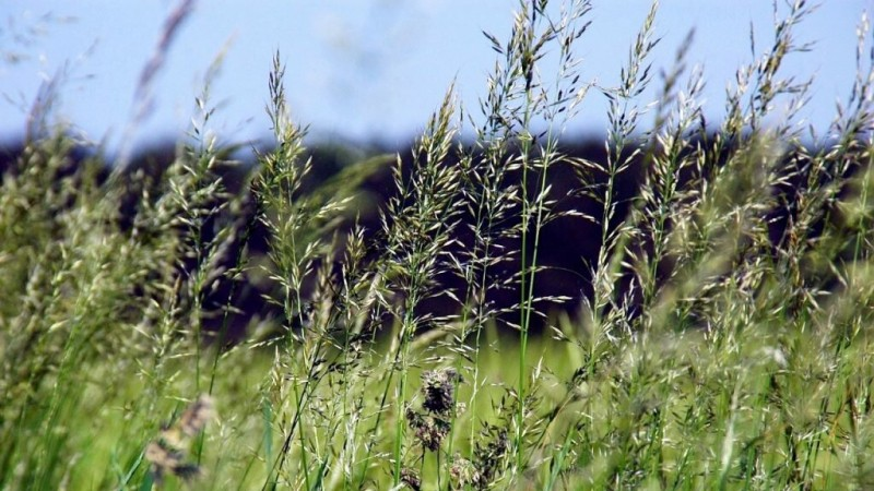Как должны косить газоны?