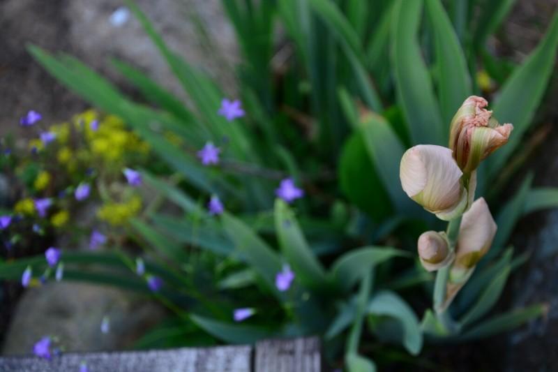 Приглашаю на прогулку в свой июньский сад!