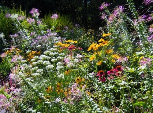 Цветник на солнечной стороне: правила создания и подбор растений