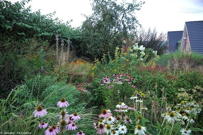 Мой сад в августе: цветут розы, клематисы и флоксы