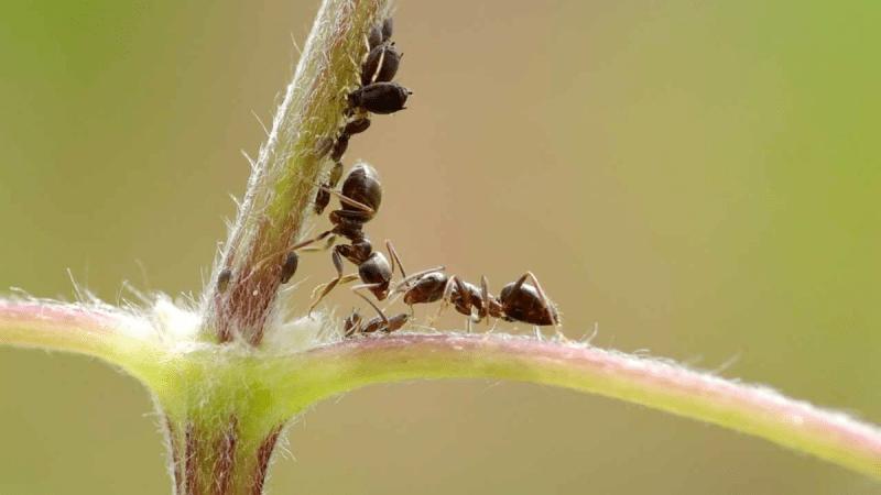 Несколько хитростей против садовых вредителей
