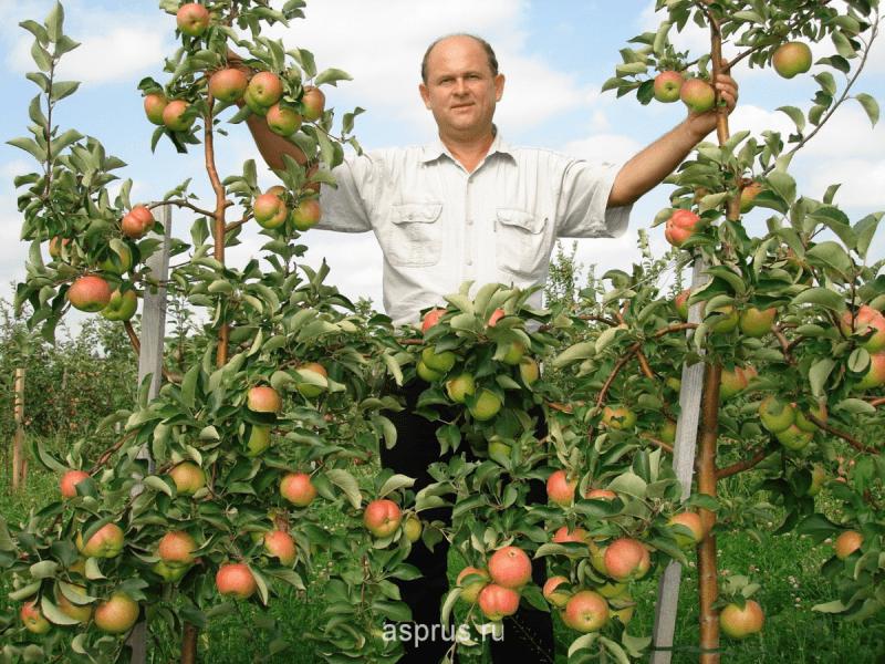 Почему дачники выращивают «ДРОВА» вместо Яблок и Груш? Думаете это не так, а вот и нет. Эту ошибки совершает большинство дачник