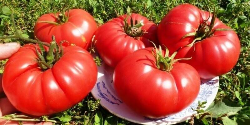 Подвожу итог: самые Урожайные сорта Томатов, которые я сажала в 2020 году. В следующем году Обязательно посажу их и всем советую