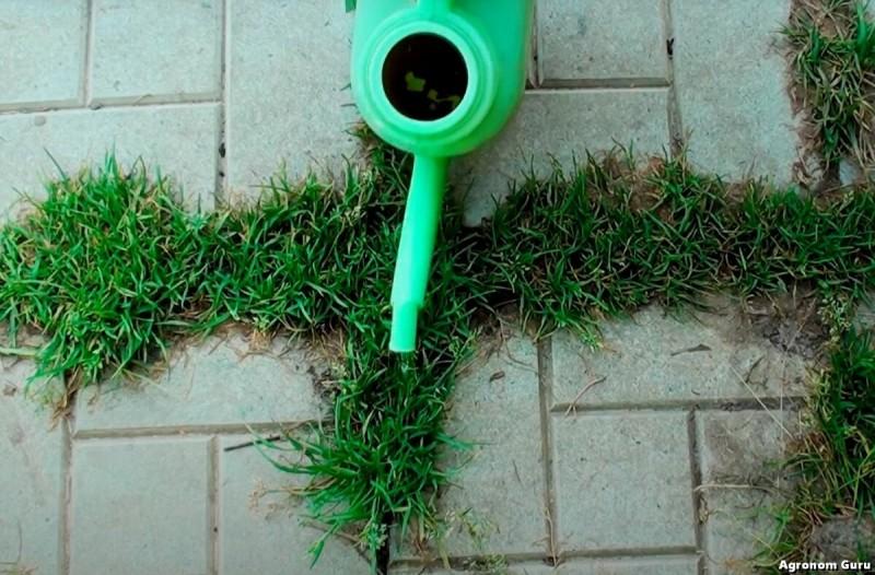 Простое средство которое избавит Вас от сорняков между плиток