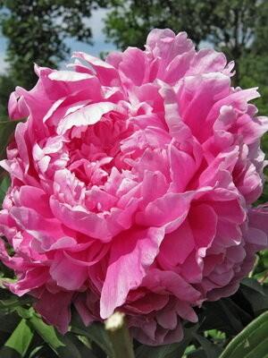 Самые популярные цветы