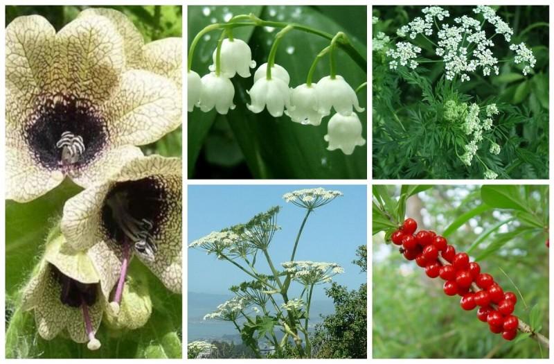 Топ-5 опасных растений названы медиками