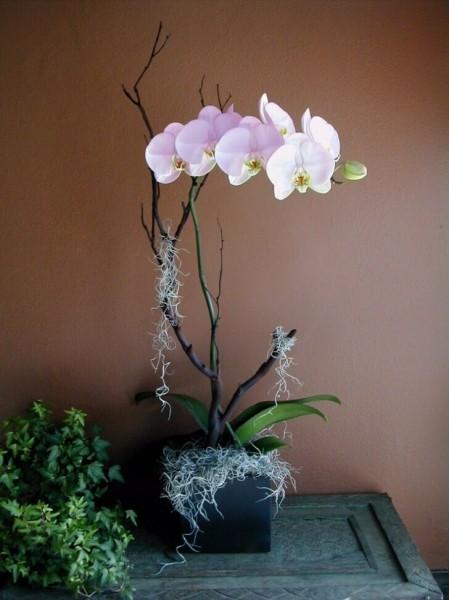 Что больше всего не любят орхидеи - можно так и потерять все цветы