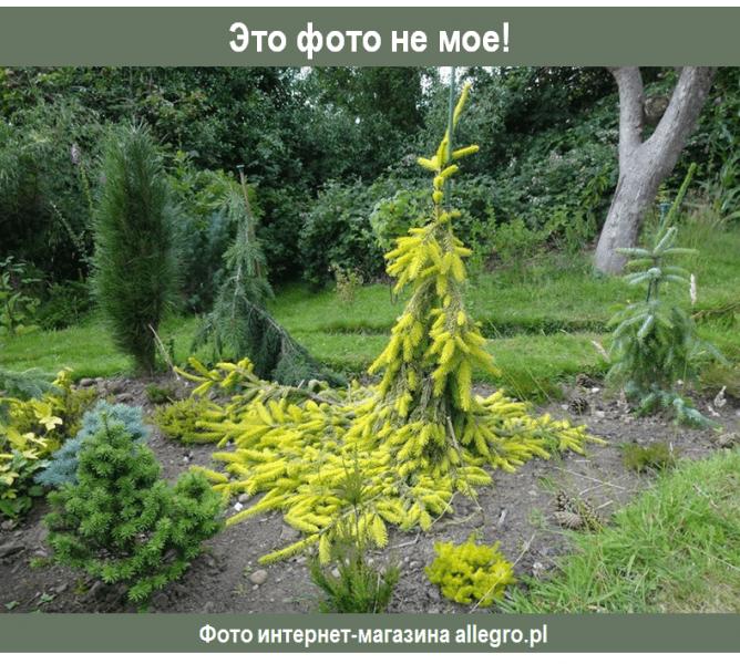 Что красивого в моем саду в середине сентября