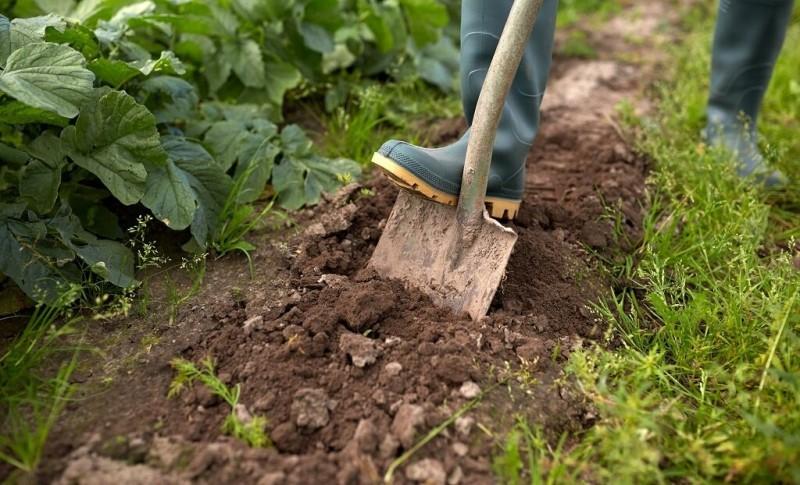 Чтобы избавиться от сорняков, не обязательно постоянно перекапывать участок. Есть методы гораздо проще!