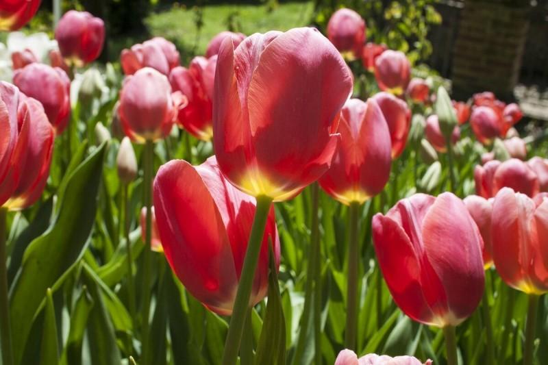 Цветы, которые обязательно нужно посадить в Сентябре и уже весной у вас будет цветущий Красивый сад