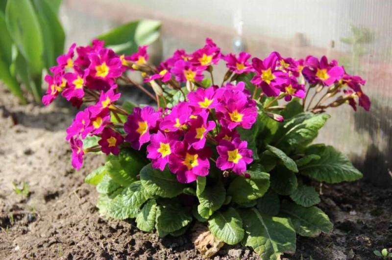 Какие цветы сажают осенью на участке