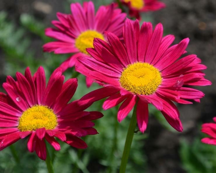 Какие цветы сажать и пересаживать осенью