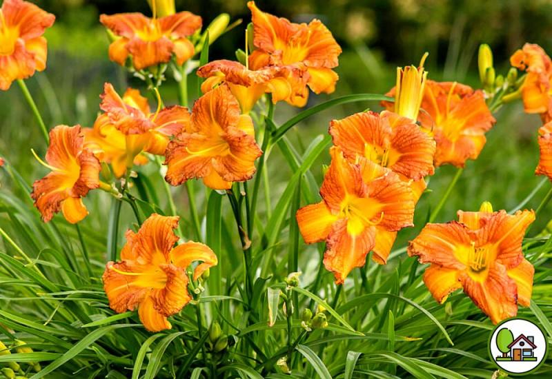 Какие самые неприхотливые цветы могут украсить любой сад