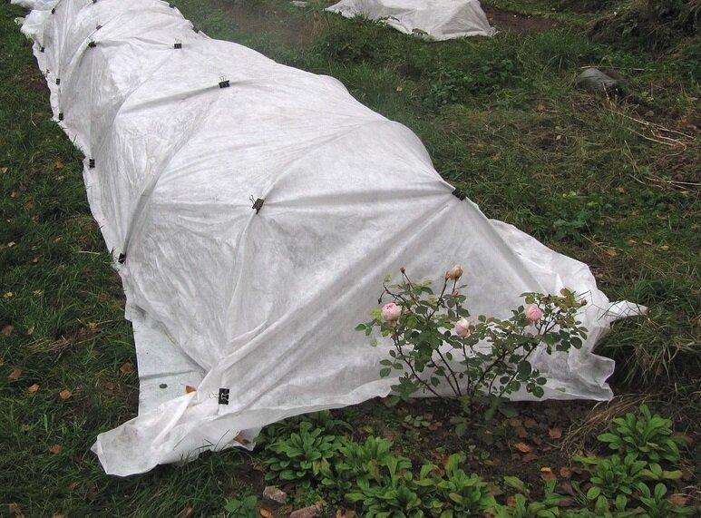 Каждый год укрываю розы на зиму по своей схеме и им не страшны никакие холода