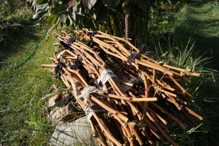 Работы в саду в сентябре: размножение кустарников, обрезка, сбор урожая