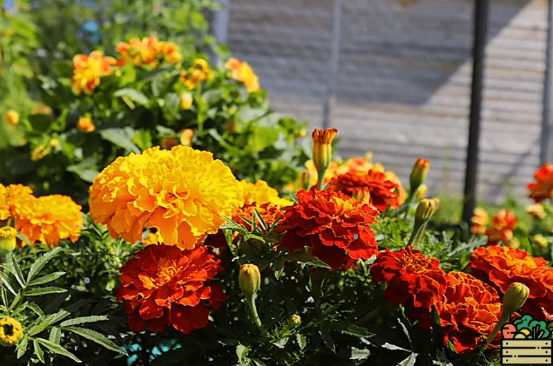 Рассказываю, что можно использовать в качестве сидерата осенью, чтобы обеспечить себя хорошим урожаем и избавиться от вредителей