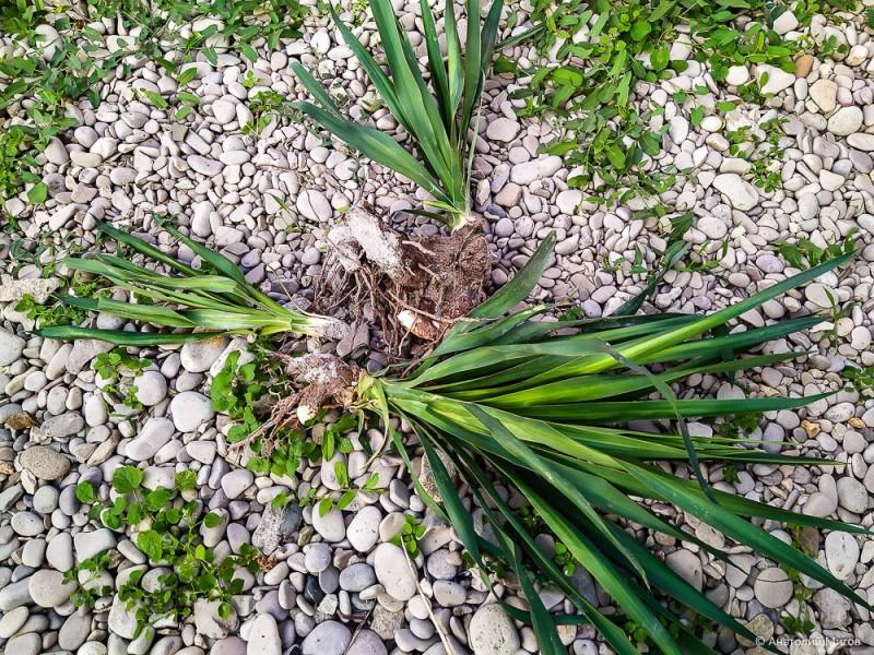 Сентябрьские цветы. Что сейчас цветет в нашем крымском саду?