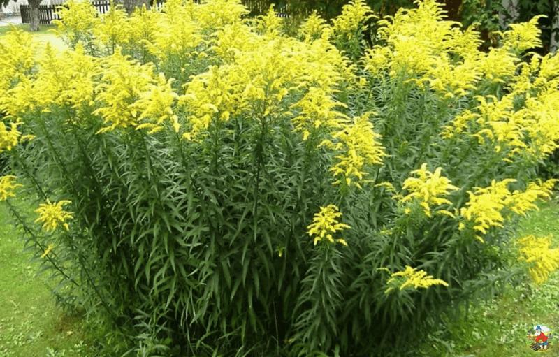 Сосед рассказал, как не дать сорнякам расти на пустых грядках до самой весны. Я был поражен простотой решения