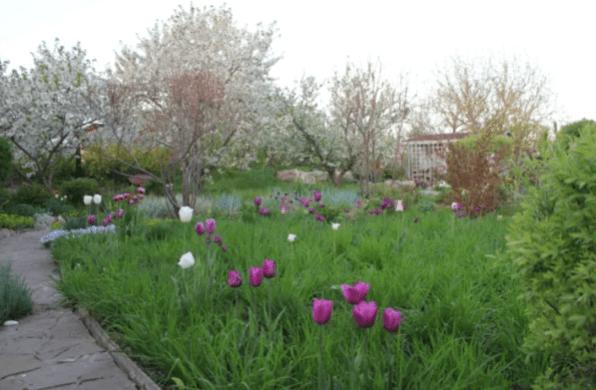 Что посадить поверх тюльпанов: креативные идеи моих читателей