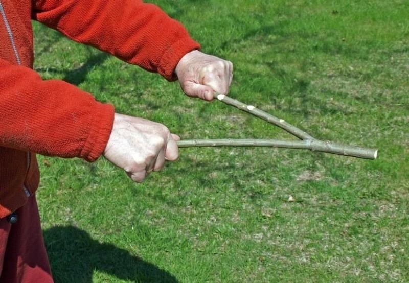 Ищем воду! Проверенные способы поиска места для колодца на участке