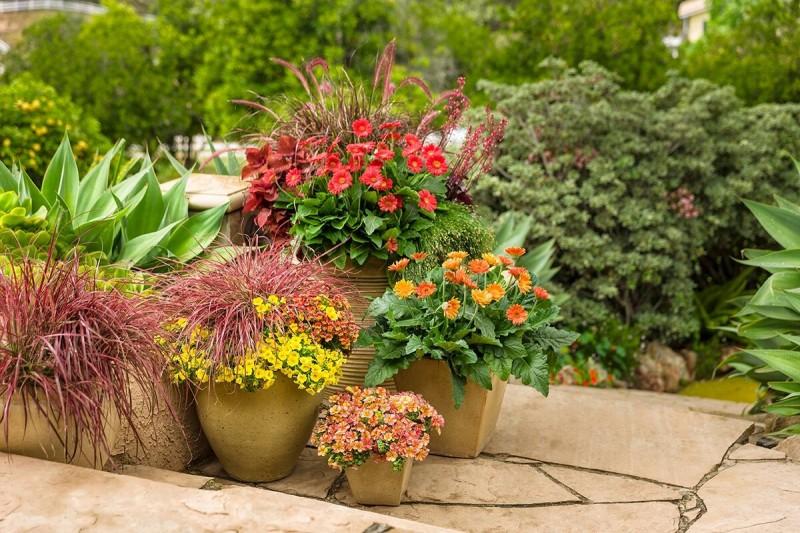 Как сделать модный контейнерный сад?