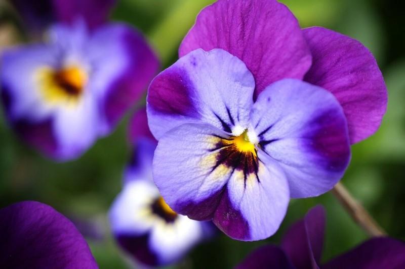 Какие цветы можно сеять под зиму. Выбрала самые красивые с ранним цветением до морозов (и без всяких хлопот)