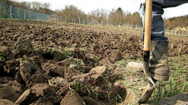 Почему обязательно необходимо перепахивать или перекапывать огород осенью.