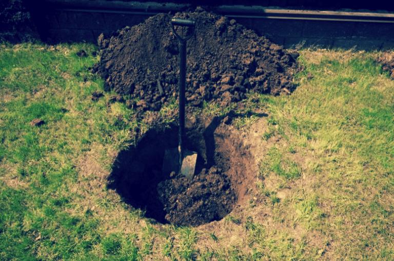Посадил грушу, и уже через год собрал урожай! Делюсь секретами, которые «поведал» мой сосед
