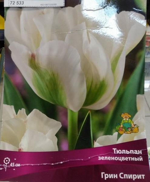 Рядом с розами будут расти тюльпаны и лилии. Мой вариант посадки луковичных растений