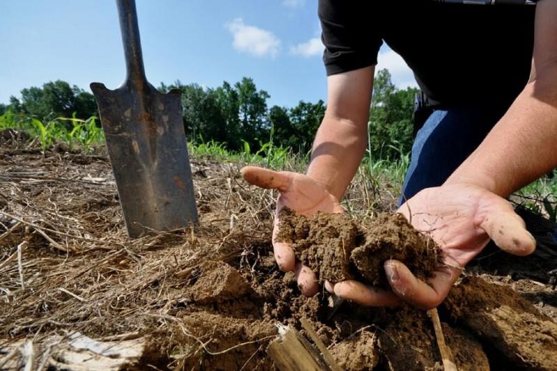 Усталость земли: как вылечить огород