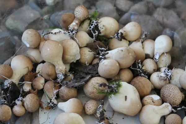 Вредные грибы на садовом участке (а кому-то на радость)