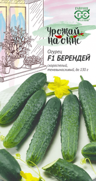 Как я легко выращиваю свежие огурцы к Новому году