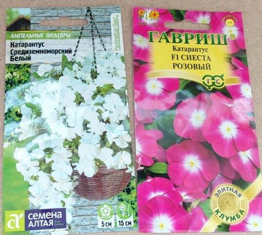 Какие цветы посею на рассаду уже в ноябре