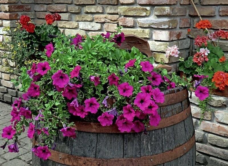 Какие растения из вашего сада нужно выбросить без сожаления