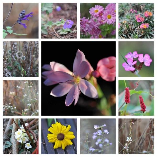 Мой сад в середине ноября