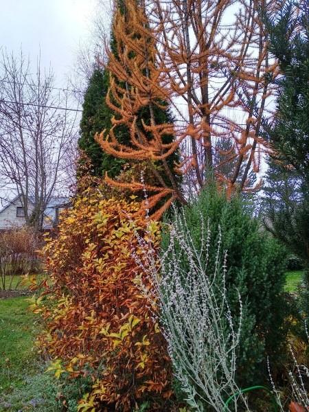 Ноябрьские краски сада