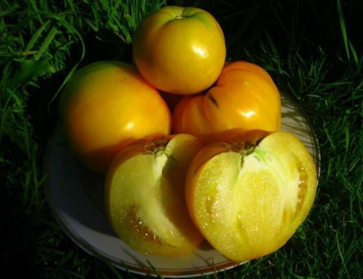 ТОП-7 урожайных сортов биф-томатов для выращивания на садовом участке. Часть 1