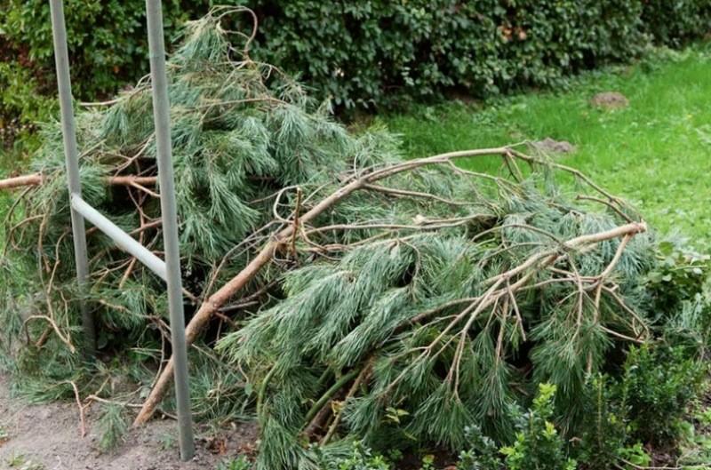 Укрывать растения следует с умом: самые типичные ошибки садоводов при подготовке сада к зиме