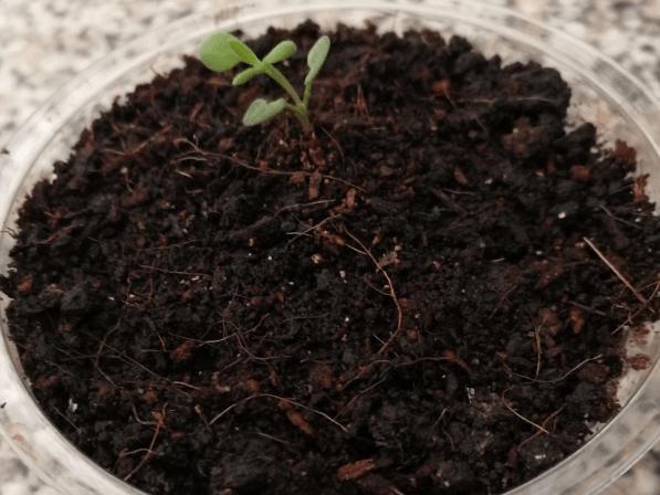 Чтобы семена всходили и всходы не погибали, маленькие хитрости