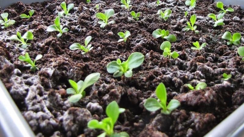 Гидрогель поможет вырастить отличную рассаду: основные способы и нюансы использования