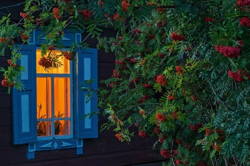 Какие деревья нельзя сажать возле дома согласно народным приметам.