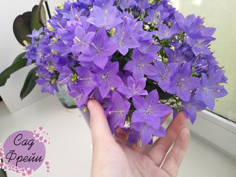 Комнатные цветы, от которых я избавилась в 2020 году