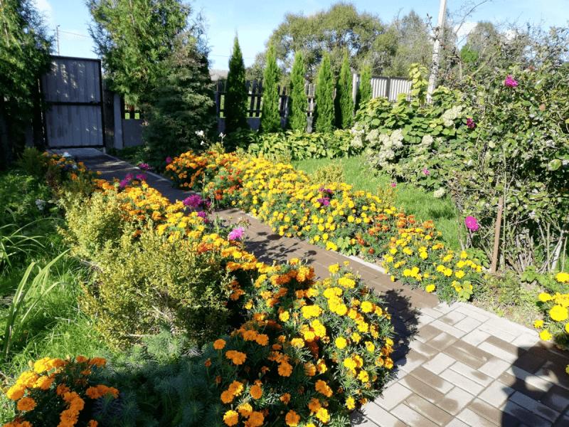 Пять наименований цветов, которые я обещала себе никогда больше не выращивать