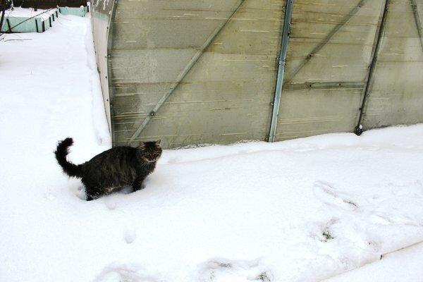 Почему нужно обязательно закрывать на зиму теплицу