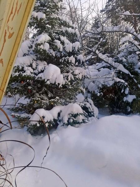 Как мы зимуем на даче