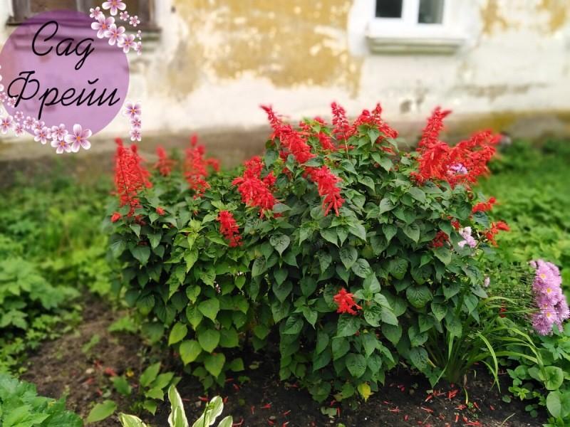 Когда сеять на рассаду петунию, лобелию, бархатцы и ещё 14 красивых однолетних цветов. Шпаргалка по месяцам